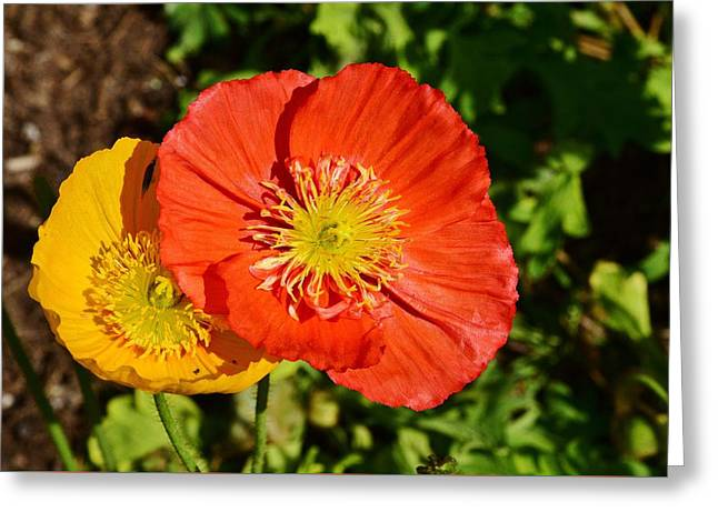 Orange And Yellow Poppies 1 Greeting Card