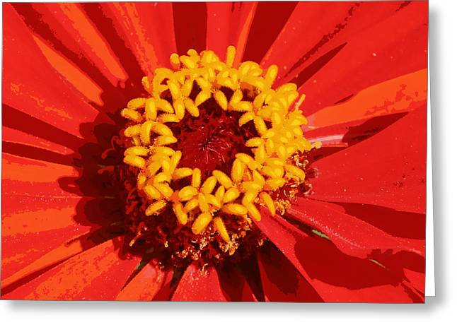 Orange And Yellow Zinnia Abstract Greeting Card by Carol Groenen