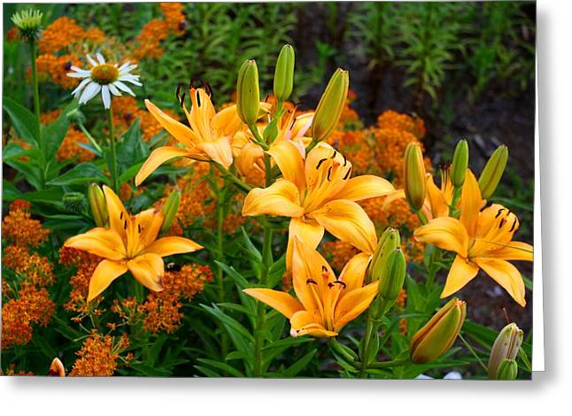 Greeting Card featuring the photograph Orange Asiatic Lilies And Butterfly Weed by Kathryn Meyer