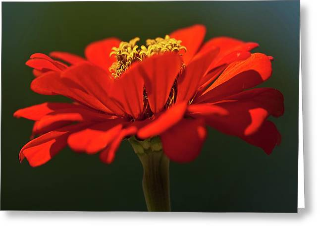 Greeting Card featuring the photograph Orange Aster-a Bee's Eye View by Onyonet  Photo Studios