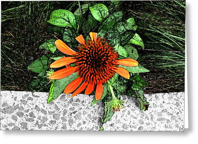 Greeting Card featuring the photograph Orange At Highline Nyc by Joan  Minchak