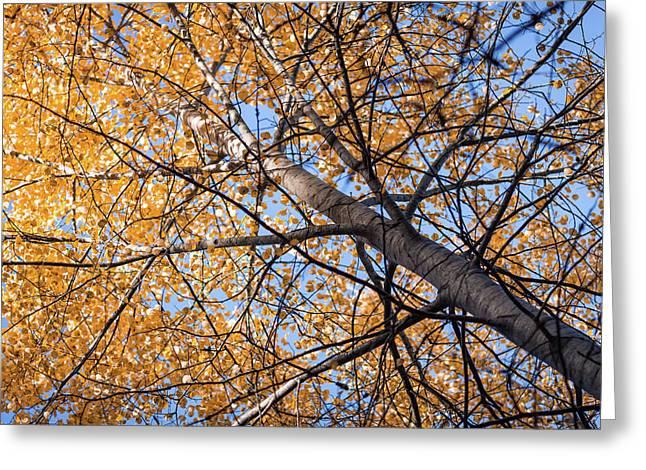 Orange Autumn Tree. Greeting Card by Teemu Tretjakov