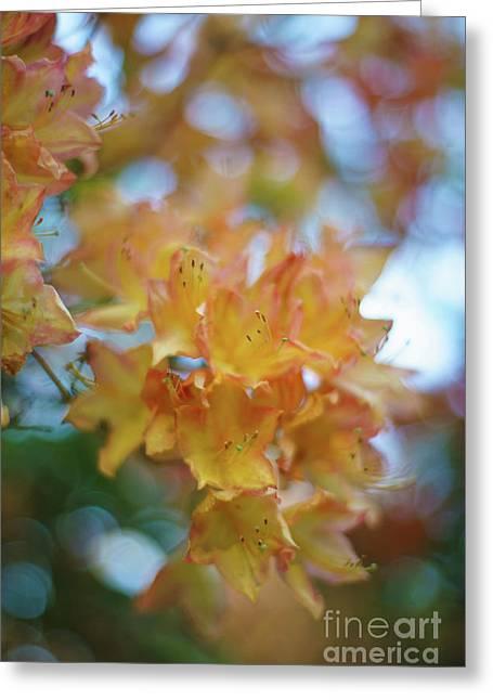 Orange Azaleas Dream Greeting Card by Mike Reid
