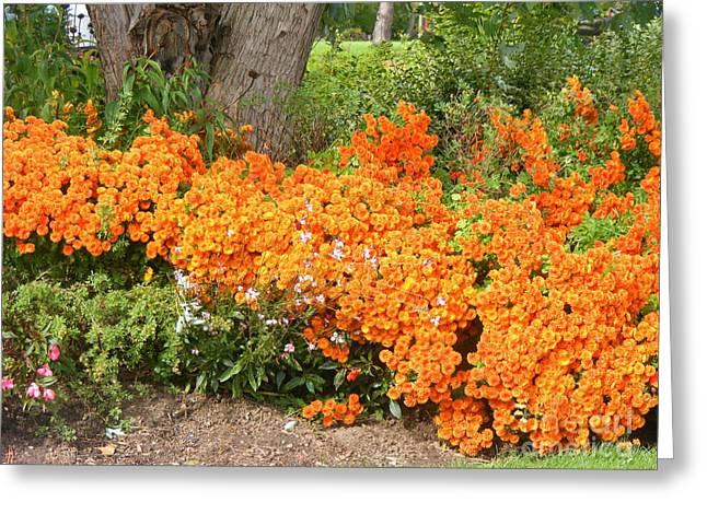 Orange Beauty Greeting Card by Deborah Selib-Haig DMacq