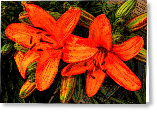 Greeting Card featuring the photograph Orange Beauty by Fanny Diaz