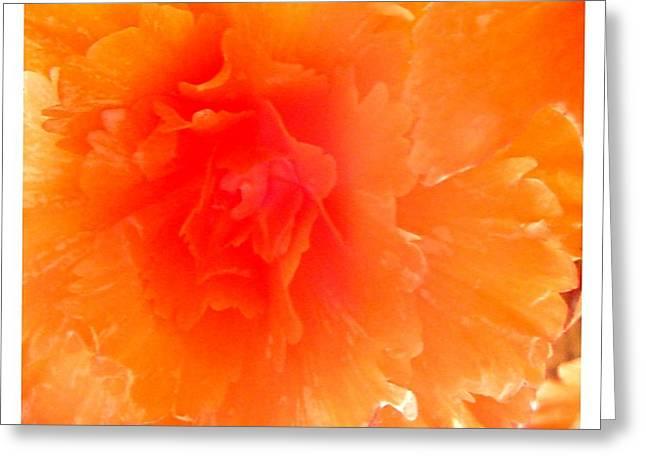 Orange Blast Greeting Card