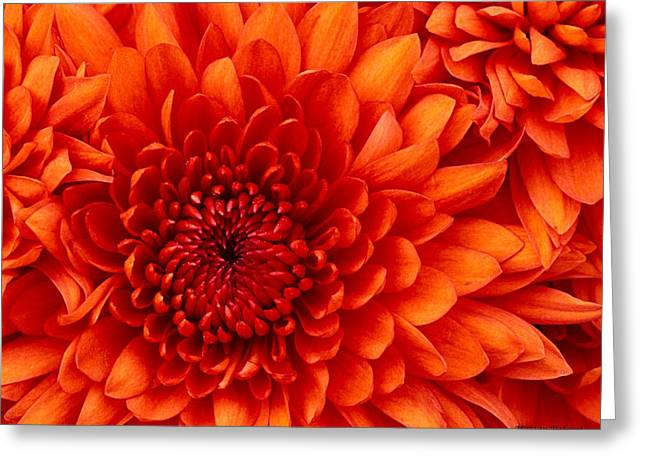 Orange Bloom Greeting Card