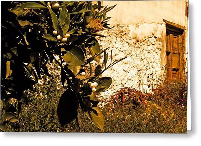 Orange Blossom Ruin Greeting Card by Ingrid Dance
