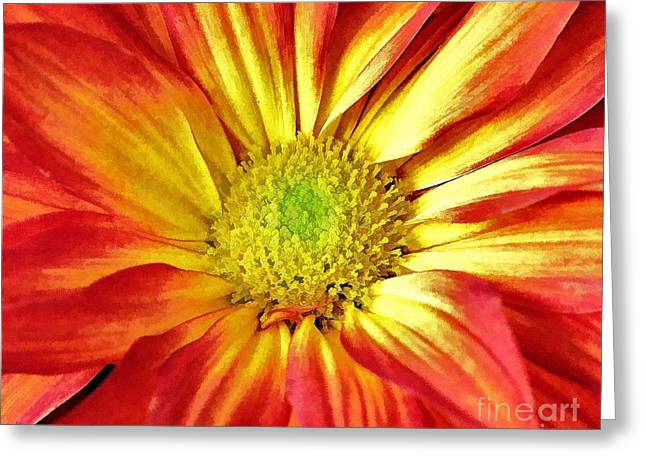 Greeting Card featuring the photograph Orange Burst by Allen Beatty