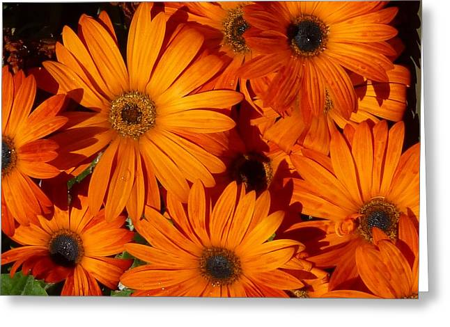 Orange Burst Greeting Card