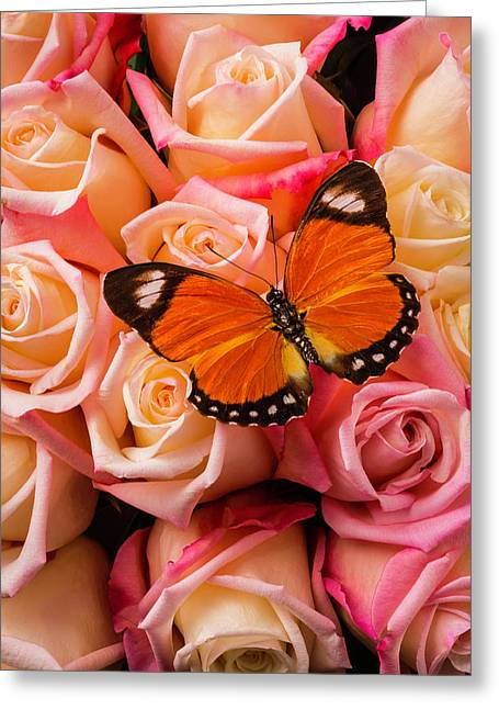 Orange Butterfly On Pink Roses Greeting Card