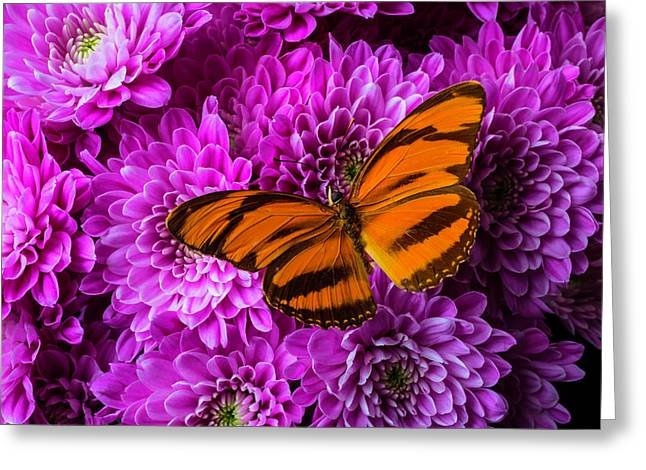 Orange Butterfly On Pompons Greeting Card by Garry Gay
