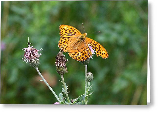 Orange Butterfly Greeting Card by Pierre Leclerc Photography