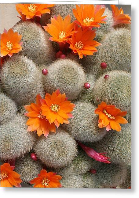 Orange Cactus Flowers Greeting Card