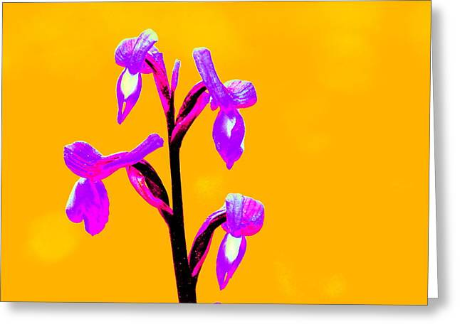 Orange Champagne Orchid Greeting Card