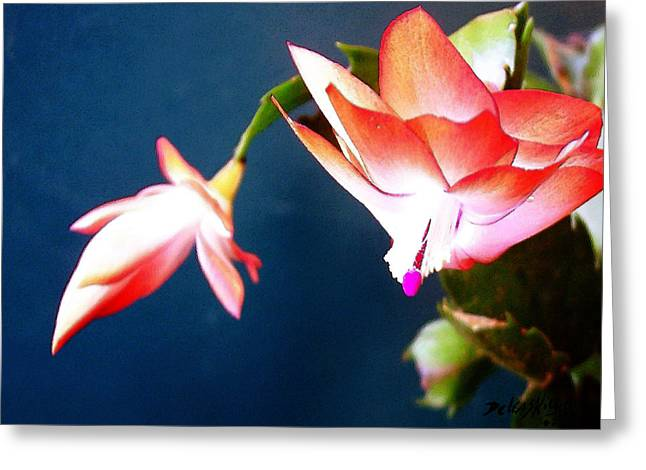 Orange Christmas Cactus II Greeting Card