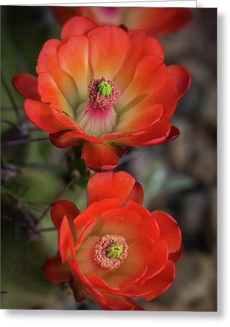 Greeting Card featuring the photograph Orange Claret Dreams  by Saija Lehtonen