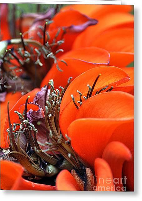 Orange Greeting Card by Clayton Bruster