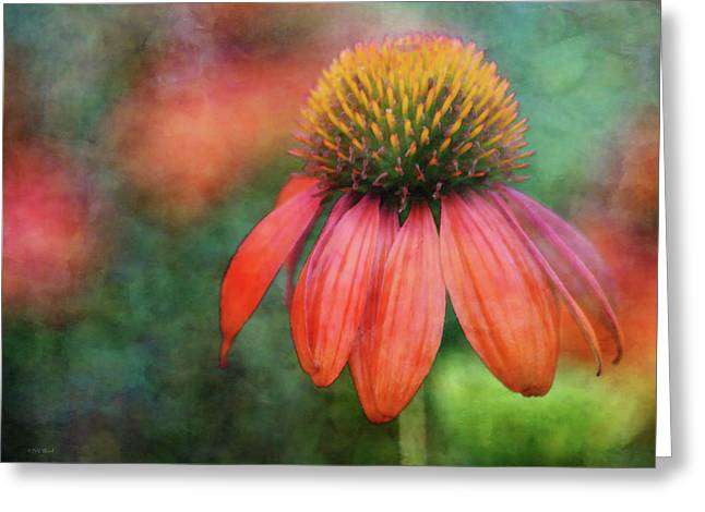 Orange Coneflower 2576 Idp_2 Greeting Card