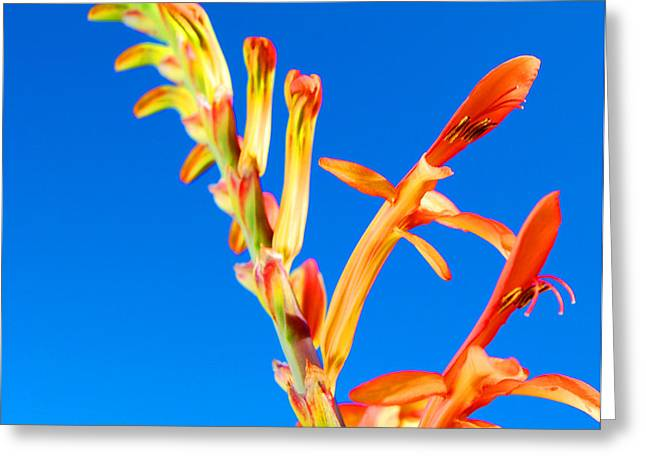 Orange Contrast Greeting Card by Jean Booth