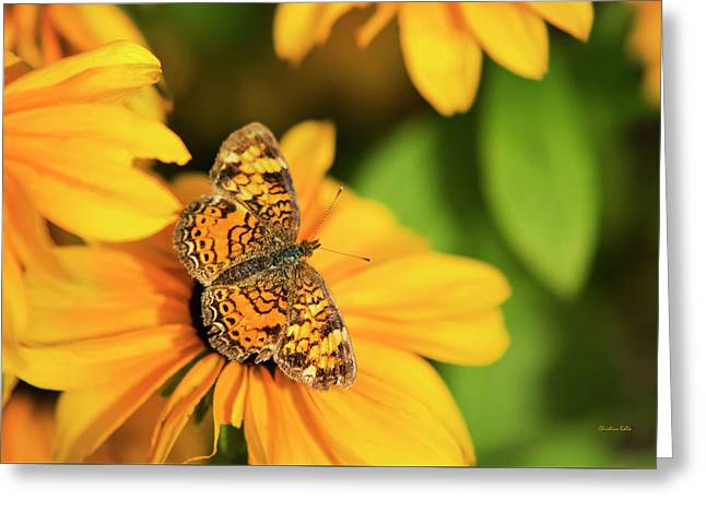 Orange Crescent Butterfly Greeting Card by Christina Rollo