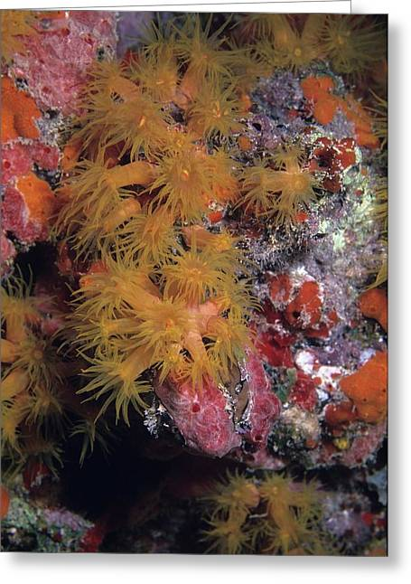Orange Cup Coral And Sponges Greeting Card