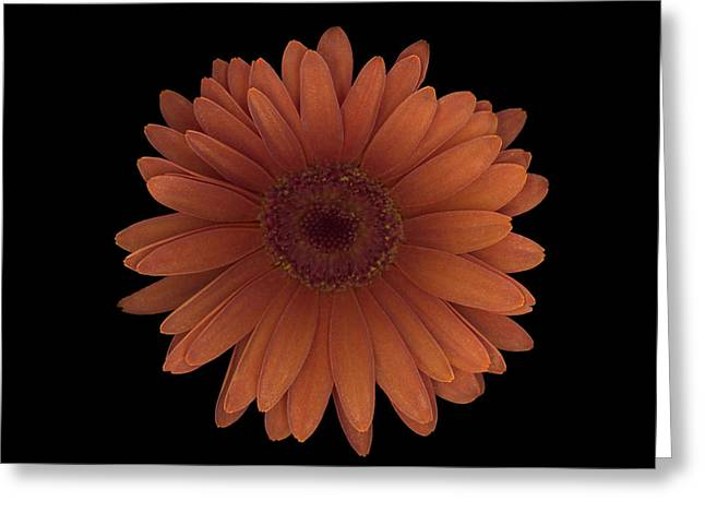 Orange Daisy Front Greeting Card