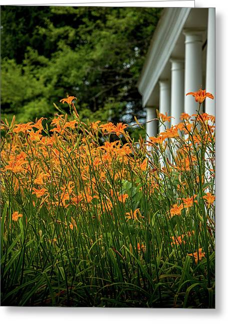 Orange Day Lily Greeting Card by Howard Roberts