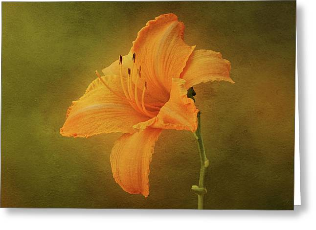 Orange Daylily Greeting Card