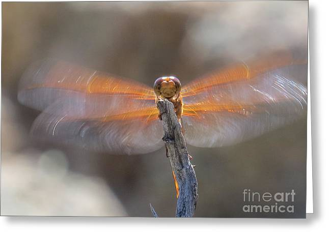 Dragonfly 4 Greeting Card