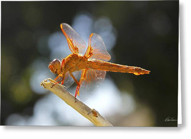 Orange Dragonfly Greeting Card