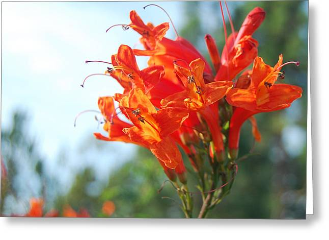 Orange Echo Greeting Card by Jean Booth