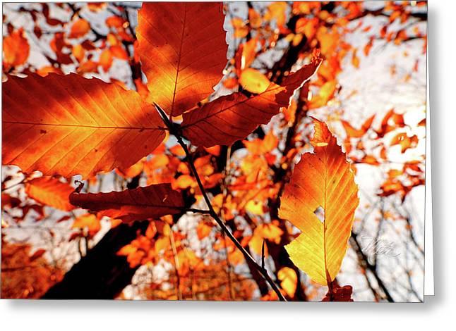 Orange Fall Leaves Greeting Card