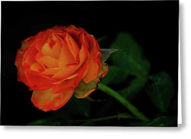 Orange Flower Greeting Card by Chaza Abou El Khair