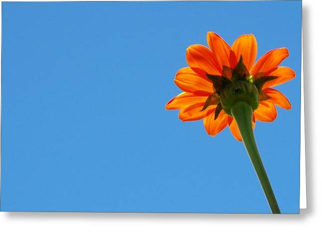 Orange Flower On Blue Sky Greeting Card