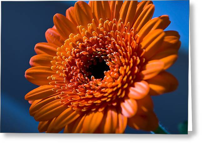 Orange Flower Greeting Card by Svetlana Sewell