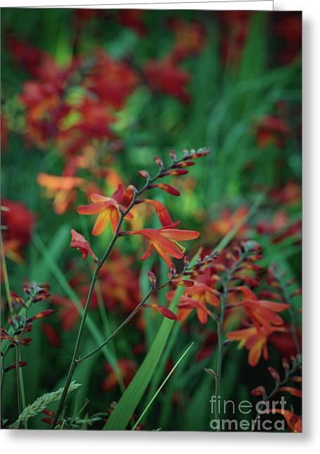 Orange Flowers 8 Greeting Card