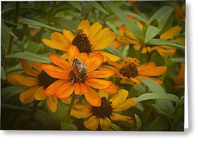 Orange Flowers And Bee Greeting Card