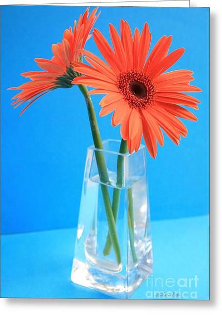 Orange Gerberas In A Vase - Aqua Background Greeting Card