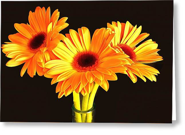 Orange Gerbera's Greeting Card