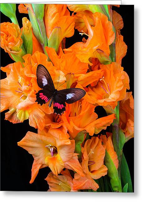 Orange Glad With Butterfly Greeting Card by Garry Gay
