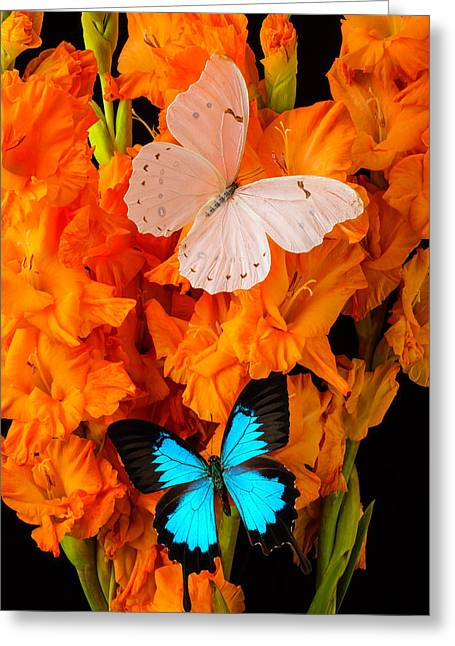 Orange Glads With Two Butterflies Greeting Card by Garry Gay
