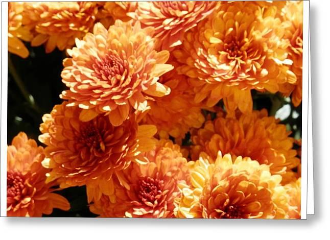 Orange Glory Greeting Card