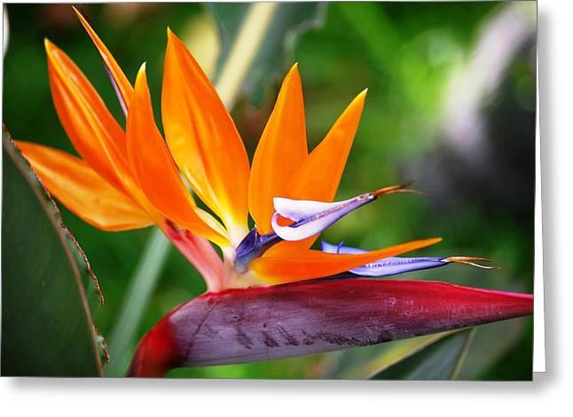 Orange Glow Greeting Card by Lakida Mcnair