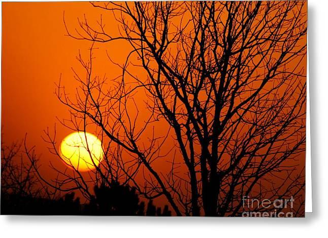 Orange Glow Greeting Card by Lynn Reid