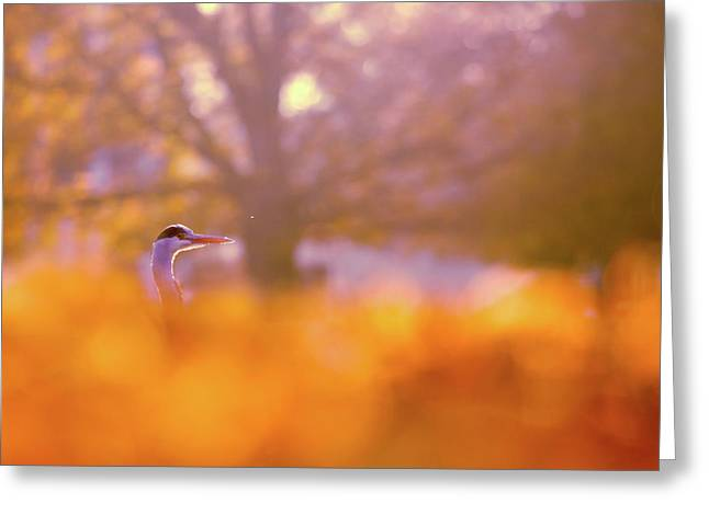 Orange Haze -blue Heron In Autumn Scene Greeting Card