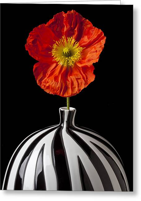 Flora Greeting Cards - Orange Iceland Poppy Greeting Card by Garry Gay