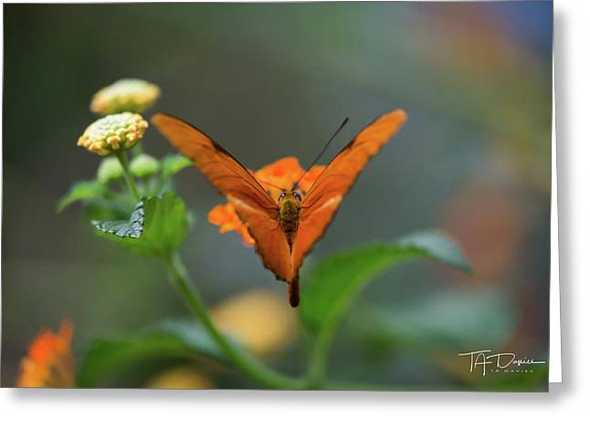 Orange Is The New Butterfly Greeting Card