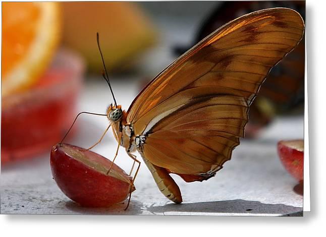 Orange Julia Butterfly Greeting Card