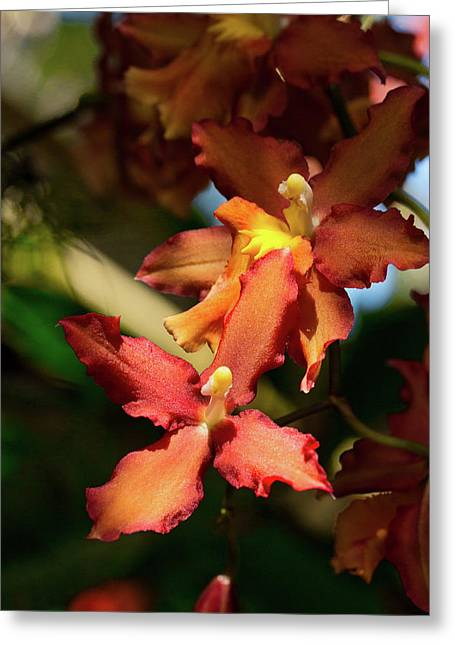 Greeting Card featuring the photograph Orange Leap by Richard Goldman